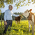 vacas · pôr · do · sol · prado · fresco · grama - foto stock © magann