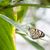 tropikalnych · kwiat · zielony · liść · biały · tablicy - zdjęcia stock © magann