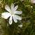 magnolia tree stock photo © magann