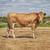 肖像 · いい · ブラウン · 牛 · フィールド · 自然 - ストックフォト © magann