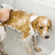 bathing a cute dog stock photo © magann
