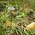 champignon · witte · bos · natuur · dood · hoofd - stockfoto © magann