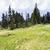 verão · paisagem · florescimento · montanha · vale · Geórgia - foto stock © magann