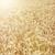 フィールド · 干ばつ · 詳細 · 地球 · 長い - ストックフォト © magann