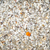 kum · kabukları · güzel · yaz · güneş · çerçeve - stok fotoğraf © magann