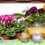 kolorowy · wiele · ogród · narzędzia · odizolowany · biały - zdjęcia stock © magann