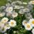 giardino · piccolo · ceramica · ciotola · primo · piano - foto d'archivio © mahout