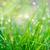 rosée · gouttes · herbe · verte · vue · peu · profond - photo stock © mahout