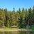 erdő · Finnország · fa · természet · zöld · levelek - stock fotó © mahout