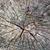 starych · drzewo · wiosną · trawy · lasu · charakter - zdjęcia stock © mahout