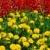 campo · de · flores · flor · primavera · paisaje · fondo - foto stock © mahout