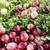 клюква · свежие · красный · мох · природы - Сток-фото © Makse
