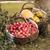 ősz · kert · almák · tökök · egymásra · pakolva · nagy - stock fotó © Makse