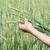 gezonde · landelijk · leven · vrouw · groene · veld - stockfoto © makse