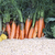 キャベツ · その他 · 野菜 · 販売 · 市場 · 食品 - ストックフォト © makse