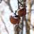 tél · almák · fagyott · hó · szín · növény - stock fotó © Makse