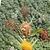fűszer · gyógynövény · keverék · absztrakt · sáfrány · csillag - stock fotó © makse