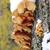 ağaç · mantar · havlama - stok fotoğraf © makse