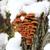 biały · kory · mech · brzozowy · tekstury · drzewo - zdjęcia stock © makse