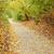 листьев · осень · улице · строительство · фон - Сток-фото © mallivan