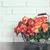 bouquet of roses stock photo © manera