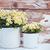 esmalte · camomila · flores · dois · vintage - foto stock © manera