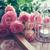 букет · белый · розовый · роз · зеленый · ваза - Сток-фото © manera