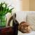 ev · iç · kedi · oturma · koltuk · duvar - stok fotoğraf © manera