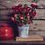 hermosa · flores · rojas · crisantemo · verde · primavera · belleza - foto stock © manera