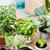 balcón · jardín · naturales · plantas · verde · urbanas - foto stock © manera