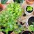 succulente · crescita · impianti · verde · bianco · legno - foto d'archivio © manera