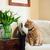 cat · sedia · soggiorno · faccia · felice · verde - foto d'archivio © manera