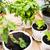 ervas · jardim · ferramentas · primavera · comida - foto stock © manera