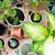 balcony garden  stock photo © manera