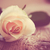 бежевый · закрывается · цветы · темно · старые · Vintage - Сток-фото © manera