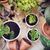varanda · jardim · naturalismo · plantas · verde · urbano - foto stock © manera