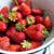 organikus · eprek · friss · érett · fehér · fut - stock fotó © manera