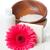 primer · plano · productos · spa · cuerpo · atención · higiene - foto stock © manera
