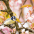 blue tit in a flowering cherry tree stock photo © manfredxy
