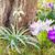 voorjaar · krokus · bloemen · weide · bloem - stockfoto © manfredxy