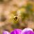 ape · macro · raccolta · polline · fioritura · primavera - foto d'archivio © manfredxy