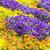 bloemen · tuin · voorjaar · natuur · blad · groene - stockfoto © manfredxy