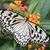 idée · papillon · insecte · bug · évolution · Espagne - photo stock © manfredxy