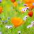 laranja · campo · foco · efeito · primavera - foto stock © manfredxy