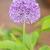 tok · çiçek · çiçekler · bahçe · güzellik · top - stok fotoğraf © manfredxy
