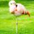 pink flamingo stock photo © manfredxy