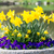 Geel · narcis · bloemen - stockfoto © manfredxy
