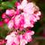 elma · ağacı · çiçek · bahar · ağaç · bahar · güzellik - stok fotoğraf © manfredxy