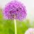 lila · növény · virágzó · absztrakt · természet · szelektív · fókusz - stock fotó © manfredxy