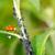 biologico · coccinella · mangiare · natura · rosso - foto d'archivio © manfredxy